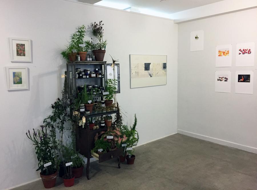 26.Plant Cure web