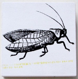 insect_2