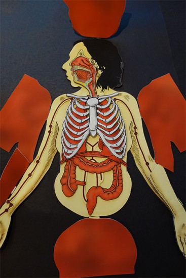 AnatomicalFlapbook-MariannePetit.jpg2