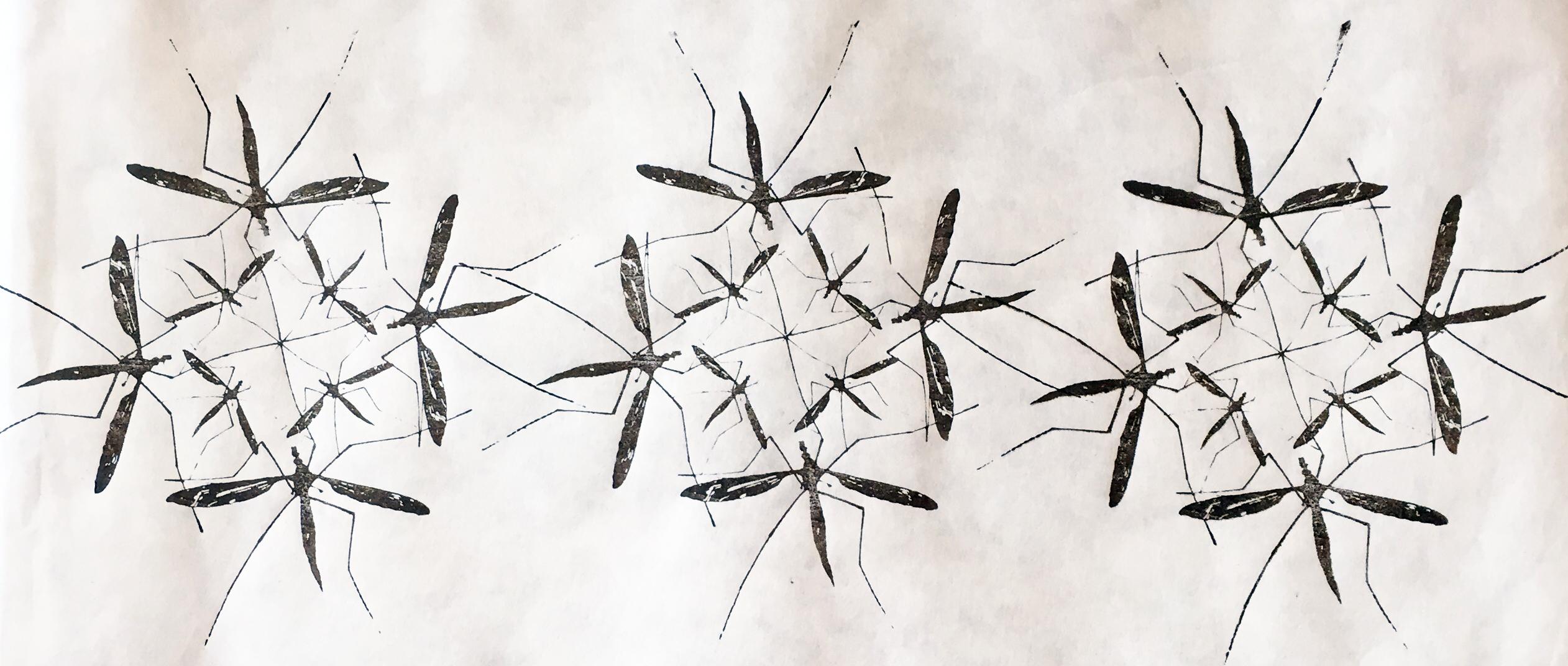 A_Vollmer_Crane Fly Fret (1)