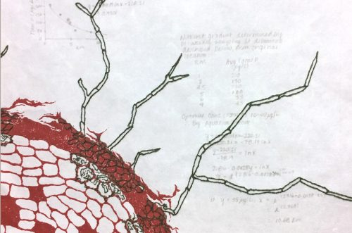 KathyStrauss_Lab Notebook 6 web